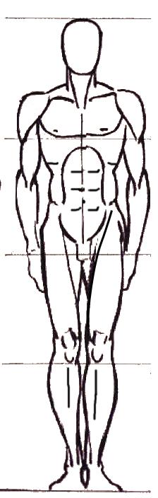 Dessiner le corps cours d 39 anatomie staps - Dessin du coeur humain ...