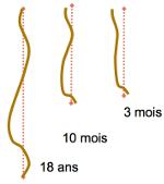 ostéologie: CRÂNE,vertèbres,sternum,coccyx,cotes Evol_CV